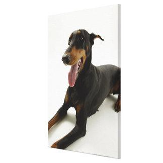 (犬)ドーベルマン・ピンシェル2 キャンバスプリント