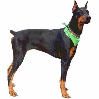 (犬)ドーベルマン・ピンシェル 写真彫刻(台付き)