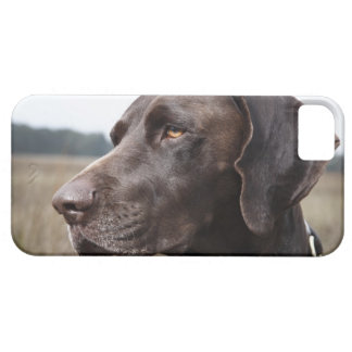 犬、ヒューストン、テキサス州、米国のポートレート iPhone SE/5/5s ケース