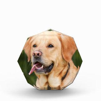 犬 表彰盾