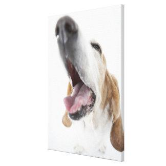 犬「sの鼻、クローズアップ キャンバスプリント