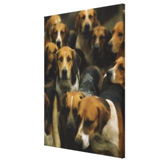 狩りのfoxhound、ゴールウェイのブレザー、アイルランド キャンバスプリント
