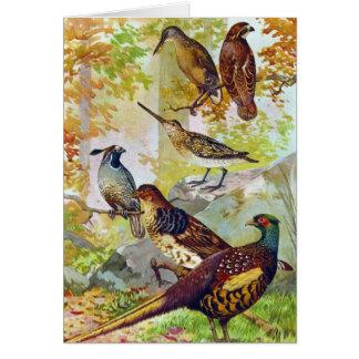 狩猟鳥1902本当の石造りのChromolithograph カード