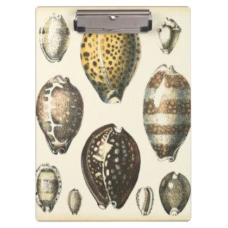 独特に定形貝殻
