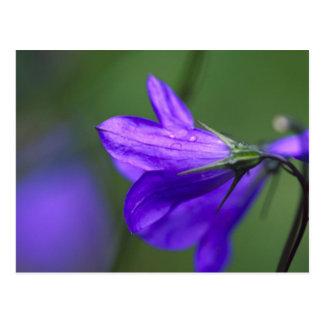 独立パスのBluebellの花 ポストカード