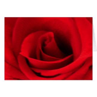 独身ので赤いバラ カード