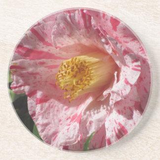 独身のなツバキの赤によって縞にされる白い花 コースター