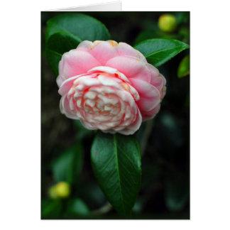 独身のなツバキの開花 カード