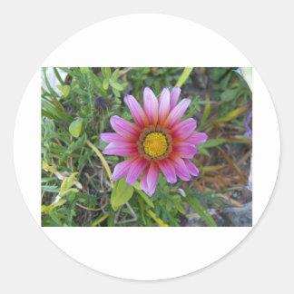 独身のな花 ラウンドシール