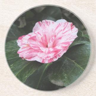 独身のな赤によって縞にされる白い花のツバキのjaponica コースター