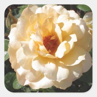 独身のな黄色バラ スクエアシール
