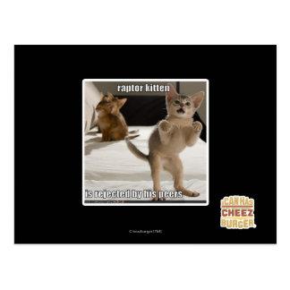 猛禽の子ネコ ポストカード