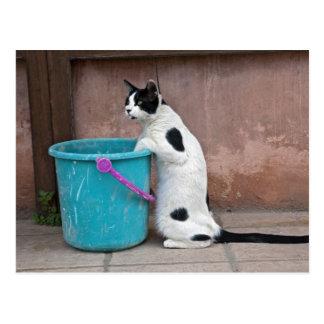 猫およびバケツ、Chania、クレタ、ギリシャ ポストカード