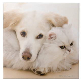 猫および犬の撃たれるスタジオ タイル