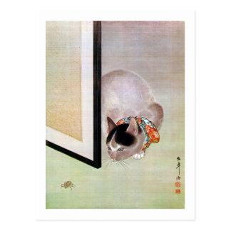 猫と蜘蛛、東皐猫およびくも、Toko ポストカード