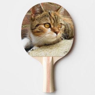 猫のかい ピンポンラケット