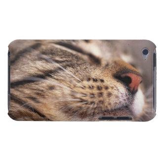 猫のひげおよび口輪のクローズアップ Case-Mate iPod TOUCH ケース