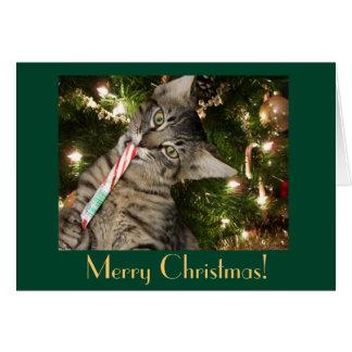 猫のキャンディ・ケーンのブランクのクリスマスカード カード
