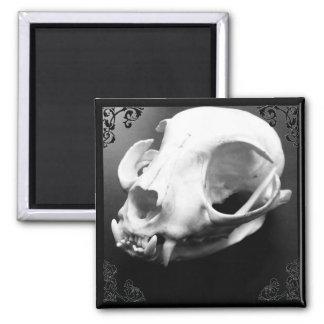 猫のスカルの剥製術のゴシック様式磁石 マグネット