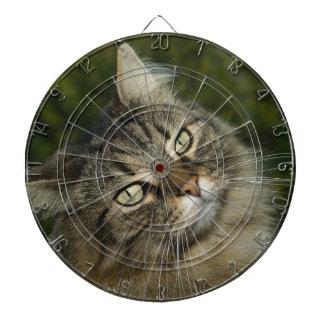 猫のノルウェーの森林猫の甘い国内猫Curiou ダーツボード