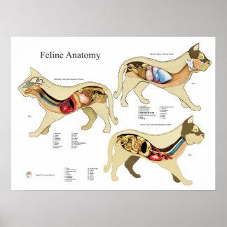 猫の内臓の解剖学の獣医の図表 ポスター