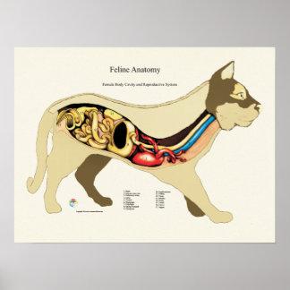 猫の内部女性の解剖学の獣医の図表 ポスター