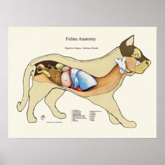 猫の内部消化が良い解剖学の獣医の図表 ポスター