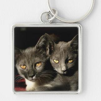猫の写真のキーホルダー キーホルダー