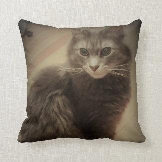 猫の写真 クッション