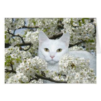 猫の春の熱 グリーティングカード