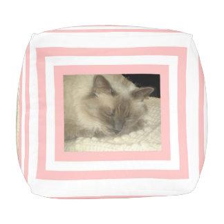 猫の昼寝 プーフ