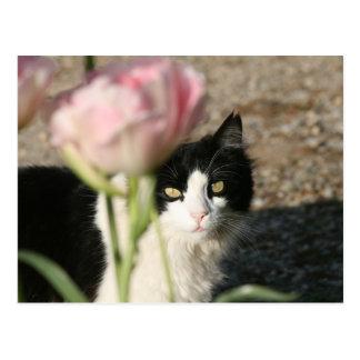 猫の熟視 ポストカード