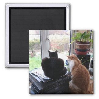 猫の眺めの写真の磁石 マグネット
