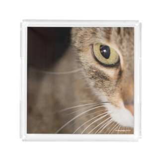 猫の顔の香水の皿のギフトのアイディア アクリルトレー