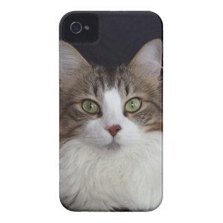 猫の顔 Case-Mate iPhone 4 ケース