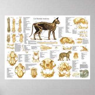 猫の骨格スカルの解剖学ポスター18 x 24 ポスター