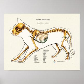 猫の骨格共同解剖学の獣医の図表 ポスター
