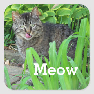 猫の鳴き声の庭のステッカーの灰色の虎猫猫 スクエアシール