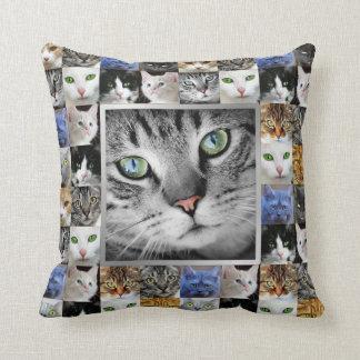 猫はコラージュの写真テンプレートに直面します クッション