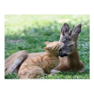 猫はシカを愛します ポストカード