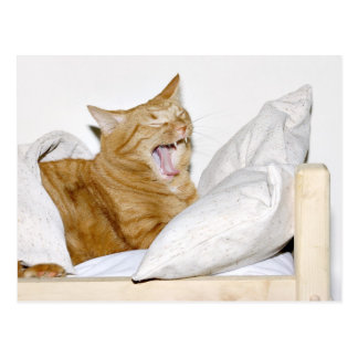 猫は朝を憎みます ポストカード