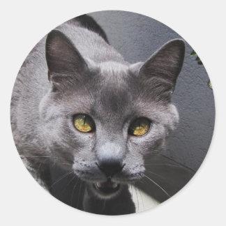 猫は話します ラウンドシール