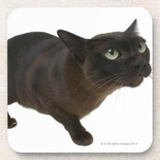 猫2のクローズアップ コースター