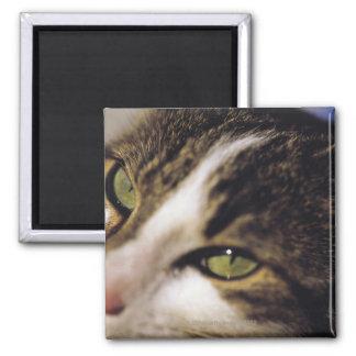 猫2 マグネット