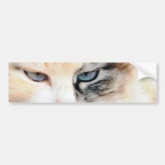 猫 バンパーステッカー
