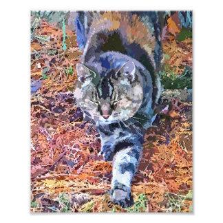 猫 フォトプリント