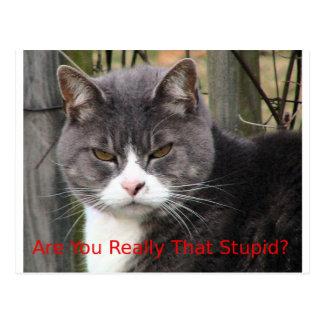 猫: 実際にその愚かですか。 ポストカード