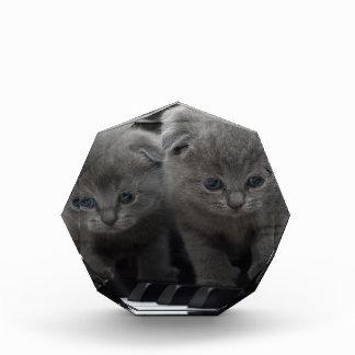 猫 表彰盾