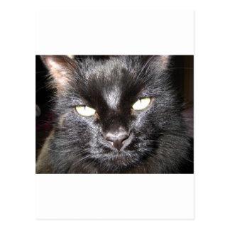 猫、黒 ポストカード