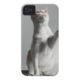 猫 Case-Mate iPhone 4 ケース